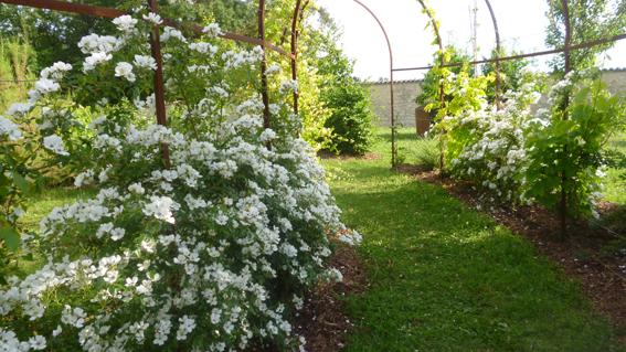 Jardin du gui saint amant de boixe jardins d 39 isis les for Entretien jardin handicapes